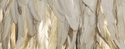 angel gold feathers