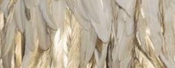 des plumes pour parler à son ange gardien et recevoir sa guidance